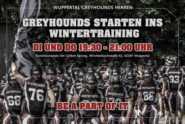 Greyhounds starten ins Training